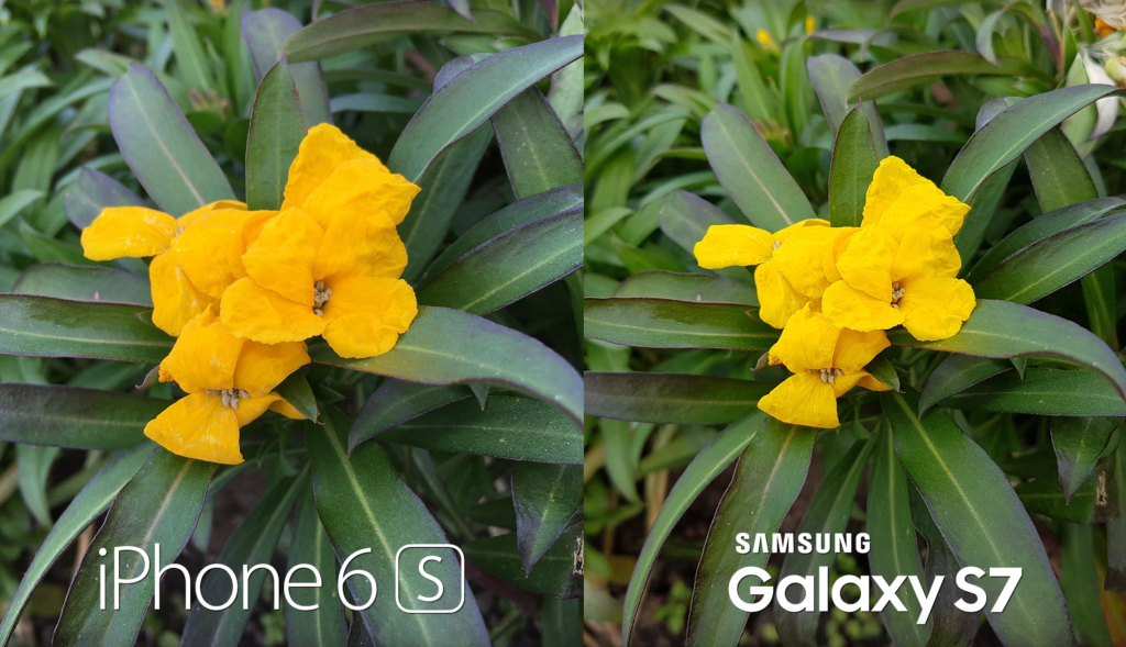 Galaxy-S7-vs-iPhone-6S-Plus-camera-test